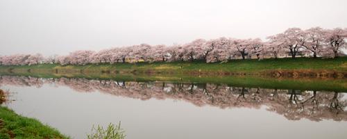 一目千本桜.jpg