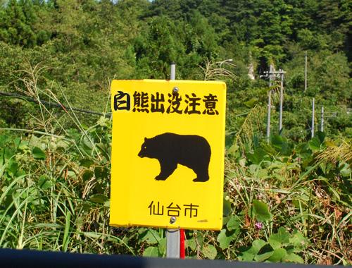 白熊出没.jpg
